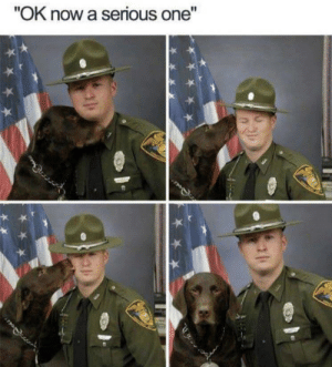 """Dank, Dogs, and Memes: """"OK now a serious one"""" What did we do to deserve dogs? by Zhurrey MORE MEMES"""