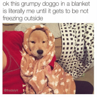 Wake me up when winter is over 😴 (Rp @thedailylit go follow @thedailylit): ok this grumpy doggo in a blanket  is literally me until it gets to be not  freezing outside  @the dailylit Wake me up when winter is over 😴 (Rp @thedailylit go follow @thedailylit)
