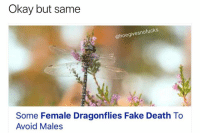 Fake, Death, and Okay: Okay but same  hoegivesnofucks  Some Female Dragonflies Fake Death To  Avoid Males And they say humans are the smartest... ( @1foxybitch )
