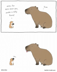 Memes, Okay, and 🤖: okay, for  this next Pic,  make a silly  face I  cl  Oliz climo  fine.  lizclimo, tumblr.com capybara, you so silly.  thelittleworldofliz.com