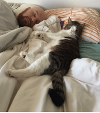 Memes, 🤖, and Honestity: Okay let's be honest here! How many of us let our furbabies sleep in our bed? 😄 LifeWithCats CatDad ilovemycat cuddlebug