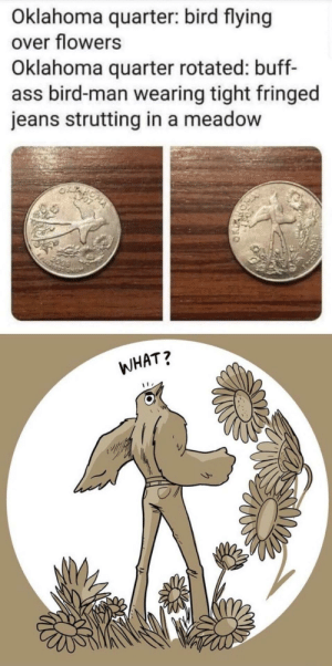 Oklahoma birb: Oklahoma quarter: bird flying  over flowers  Oklahoma quarter rotated: buff-  ass bird-man wearing tight fringed  jeans strutting in a meadow  2099  WHAT? Oklahoma birb