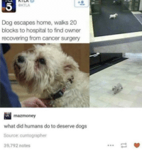 Dogs, Cancer, and Good: OKTLA  Dog escapes home, walks 20  blocks to hospital to find owner  recovering from cancer surgery  mazmoney  what did humans do to deserve dogs  Source: cuntographer  39,792 notes A Good Boy