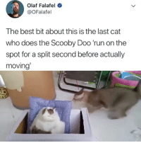 Memes, Run, and Scooby Doo: Olaf Falafel  @OFalafel  The best bit about this is the last cat  who does the Scooby Doo 'run on the  spot for a split second before actually  moving' 😂😂 Follow me ➞ @fluffypiqasso