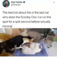 Cute, Memes, and Run: Olaf Falafel  @OFalafel  The best bit about this is the last cat  who does the Scooby Doo 'run on the  spot for a split second before actually  moving Follow my other account @x__social_butterfly__x for more cute pics and videos!!