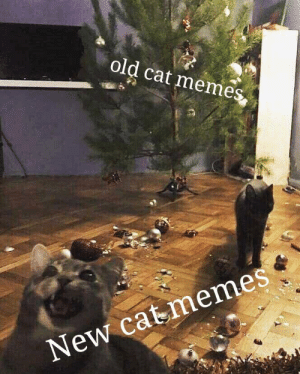 Pls, love this new format: old cat memes  New cat memes Pls, love this new format