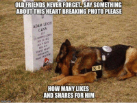 Memes, 🤖, and Cannes: OLD FRIENDS NEVER FORGE SAYSOMETHING  ABOUTTHIS HEART BREAKING PHOTO PLEASE  ADAM LEIGH  CANN  JA 1006  K-9  HOW MANY LIKES  AND SHARES FOR HIM Our friends never forget....