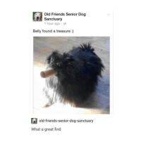 it really stresses me out when im not the only one in the break room at work: Old Friends Senior Dog  Sanctuary  1 hour ago  Belly found a treasure  old-friends-senior-dog-sanctuary  What a great find it really stresses me out when im not the only one in the break room at work