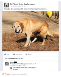 Follow our Instagram: Emelyscloud - Pip: Old Friends Senior Dog Sanctuary  1 hr. Mount Juliet, TN.  Grandpa Gus came outside for a while to enjoy the weather....  Like Comment  Share  You and 8,668 others like this.  Bernie  1 hour ago Like  13 Reply  Old Friends Senior Dog Sanctuary  Very old!  o Photos  Source: dogmaster6000 Follow our Instagram: Emelyscloud - Pip