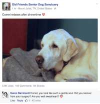 Anaconda, Dogs, and Facebook: Old Friends Senior Dog Sanctuary  1 hr Mount Juliet, TN, United States  Comet relaxes after dinnertime  5.9K Likes 100 Comments 84 Shares   Karen Barnhardt Comet, you look like such a gentle soul. Did you recover  from your surgery? Are you well sweetheart?  Like Reply 1 42 mins hafgufu: I love this facebook all these people are so gentle and these dogs are so good