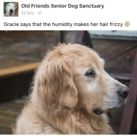 Old Friends Senior Dog Sanctuary: Old Friends Senior Dog Sanctuary  12 hrse  Gracie says that the humidity makes her hair frizzy
