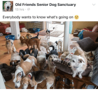 Old Friends Senior Dog Sanctuary: Old Friends Senior Dog Sanctuary  13 hrs  Everybody wants to know what's going on