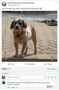 <p>He has estate in my heart :)</p>: Old Friends Senior Dog Sanctuary  14 April at 08:20  Jake (formerly Big Jake is looking and feeling good  Like  Share  Comment  83K  Most relevant  159 shares  Write a comment  Chrisabella Javier he is still big because he takes up so much  space in my heart  Like Reply 6d  0 99 <p>He has estate in my heart :)</p>