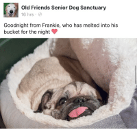 frankie: Old Friends Senior Dog Sanctuary  16 hrs  Goodnight from Frankie, who has melted into his  bucket for the night
