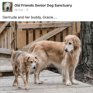 gertrude: Old Friends Senior Dog Sanctuary  19 hrs  Gertrude and her buddy, Gracie...