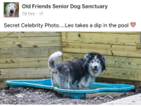 Friends, Pool, and Old: Old Friends Senior Dog Sanctuary  19 hrs  Secret Celebrity Photo..Leo takes a dip in the pool >