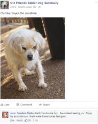 Old Friends Senior Dog Sanctuary: Old Friends Senior Dog Sanctuary  2 hrs Mount Juliet, TN-  Clumber loves the sunshine....  Like  Comment  →Share   Janet Sanders Bartus Hello handsome boy... Ive missed seeing you. Enjoy  the sun precious.. It will make those bones feel good.  Like Reply 28 -2 hrs