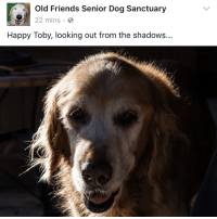 oldfriendsseniordogsanctuary ofsds toby cinnamon oreo littlebit mistermister rocco seniordog dogs: Old Friends Senior Dog Sanctuary  22 mins  Happy Toby, looking out from the shadows.. oldfriendsseniordogsanctuary ofsds toby cinnamon oreo littlebit mistermister rocco seniordog dogs