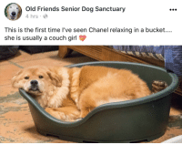 Old Friends Senior Dog Sanctuary: Old Friends Senior Dog Sanctuary  4 hrs  This is the first time I've seen Chanel relaxing in a bucket....  she is usually a couch girl
