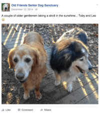 Old Friends Senior Dog Sanctuary: Old Friends Senior Dog Sanctuary  December 12, 2014.  A couple of older gentlemen taking a stroll in the sunshine... Toby and Leo  Like Comment  Share