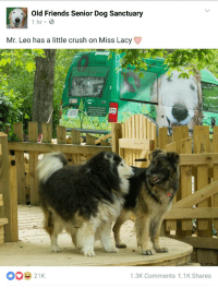 "Crush, Friends, and Love: Old Friends Senior Dog Sanctuary  Mr. Leo has a little crush on Miss Lacy  26123  1.3K Comments 1.1K Shares <p><a href=""http://interstate-k8.tumblr.com/post/143195892860/love-is-in-the-air"" class=""tumblr_blog"">interstate-k8</a>:</p>  <blockquote><p>Love is in the air</p></blockquote>"