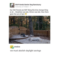 Memes, Breakfast, and Daylight Savings: Old Friends Senior Dog Sanctuary  NGA Yesterday at 11:26pm  Our Old Friends are NOT liking this time change thing  at all  Breakfast was late. Dinner was late. Now there  goes the sun at 5pm  SnaiCS  we must abolish daylight savings D: - Max textpost textposts