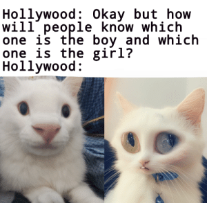 Old meme but with my cat: Old meme but with my cat