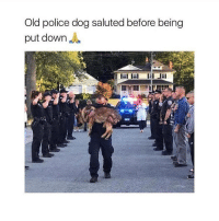 Memes, Police, and Old: Old police dog saluted before being  put downJ This hero!! 🙏🏼
