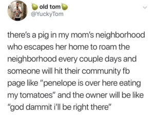 "Be Like, Community, and God: old tom  @YuckyTom  there's a pig in my mom's neighborhood  who escapes her home to roam the  neighborhood every couple days and  someone will hit their community fb  page like ""penelope is over here eating  my tomatoes"" and the owner will be like  ""god dammit i'll be right there"" Dammit Penelope"