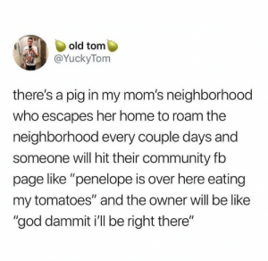 "Be Like, Community, and Dank: old tom  @YuckyTom  there's a pig in my mom's neighborhood  who escapes her home to roam the  neighborhood every couple days and  someone will hit their community fb  page like ""penelope is over here eating  my tomatoes"" and the owner will be like  ""god dammit i'll be right there"" A good problem to have."