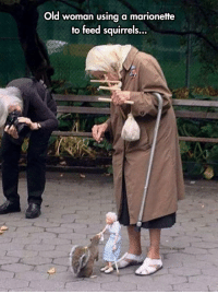 Old Woman, Tumblr, and Blog: Old woman using a marionette  to feed squirrels... srsfunny:Puppeteer In NYC