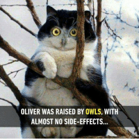 Does it call Owliver? Follow @9gag for more cute cats. 9gag cat owl creepy: OLIVER WAS RAISED BY OWLS, WITH  ALMOST NO SIDE-EFFECTS. Does it call Owliver? Follow @9gag for more cute cats. 9gag cat owl creepy