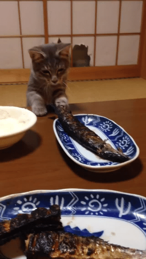 ollis-beard: never-let–it-die:  sapper-in-the-wire:   sapper-in-the-wire: GIVE HIM THE FISH Looking at it again I like the torn paper in the background suggesting that the cat busted his way into the room   ^^^ I thought the same thing   @hobbitsmind : ollis-beard: never-let–it-die:  sapper-in-the-wire:   sapper-in-the-wire: GIVE HIM THE FISH Looking at it again I like the torn paper in the background suggesting that the cat busted his way into the room   ^^^ I thought the same thing   @hobbitsmind