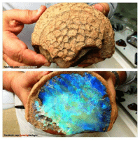 I Bet, Target, and Tumblr: ologist geologyin-blog:    I bet we could convince someone this is an alien's brain =D  Opal Fossil Coral, Australia