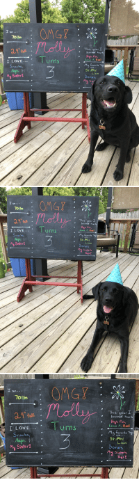 My sweet Molly is three today!: om..  10 Lbs  s uear  learned how to  h Piw  eave t, Hee  ive  I LOVE..  Snacks,  Naps  My Sister  Urns  avorite Toys  are  Stuffed  Lion  oneS  My Sis   am  10 Lbs  This year  learned hew to  ig  h five  Leave it, Heel  urns  I LOVE.  necks,  aps,  aveeite Toy  are  Sruffed  Lion  My Sister  Bon#5  ones  y Sister'   10Lbs  This  year  I  learned howto  Hiah ve  Leave it, Heel  Urns  I LOVE.  nacks  My favorite Tays  Sruffed  are. .  Lion  Bones  My Sister-  My Sister's  Toy's My sweet Molly is three today!