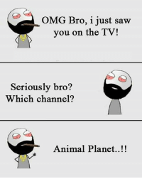 Animal Planet, Be Like, and Meme: OMG Bro, i just saw  you on the TV!  Seriously bro?  Which channel?  Animal Planet..!! Twitter: BLB247 Snapchat : BELIKEBRO.COM belikebro sarcasm meme Follow @be.like.bro