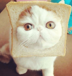 Omg, Tumblr, and Blog: omg-humor:  Firo Loves Toast