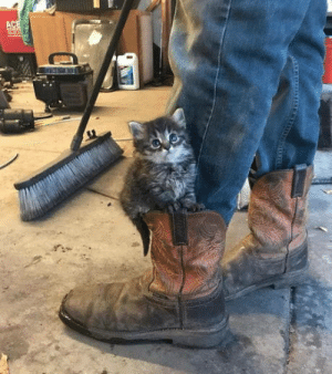 Omg, Tumblr, and Blog: omg-humor:Workshop kitten