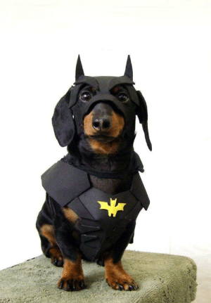 Omg, Tumblr, and Blog: omg-images:  BATDOG