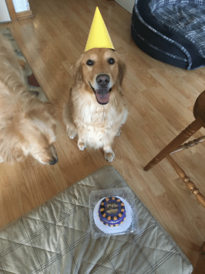 Birthday, Omg, and Tumblr: omg-images:  Birthday girl is being a good girl  posing for the picture, while her brother is more interested in the cake….