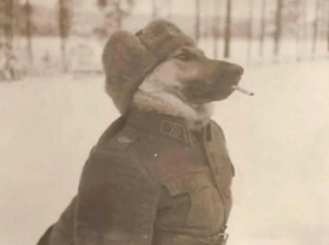Omg, Tumblr, and Army: omg-images:  Corporal Goodboye, U.S. Army 42nd Infantry Division, Stalingrad, USSR 1943