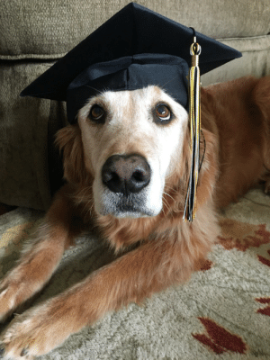 Omg, Tumblr, and Blog: omg-images:  Cue the Pup and Circumstance!