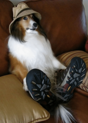 Omg, Tumblr, and Blog: omg-images:Dog Enjoy this hat and take rest..