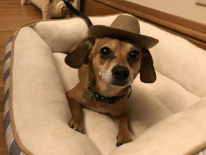 omg-images:  He Chewed Off The Elastic Band, So I Made Him Wear It As Punishment: omg-images:  He Chewed Off The Elastic Band, So I Made Him Wear It As Punishment