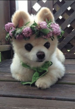 Omg, Tumblr, and Blog: omg-images:  OMG cutie in flower crown 3