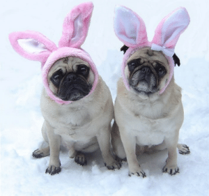 Bunnies, Easter, and Omg: omg-images:  Our Easter Bunnies