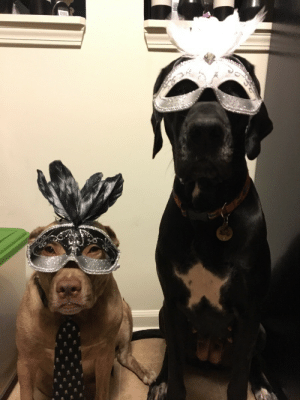 Omg, Tumblr, and Blog: omg-images:Silly Hats 78: The Grand Masquerade!