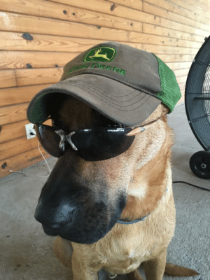 Omg, Tumblr, and Blog: omg-images:  Tucker was a dang good farm dog
