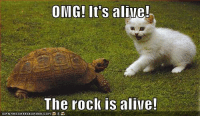 Alive, Memes, and Omg: OMG! It's alive!  The rock is alive!  ICANHASCHEEZEURGER.COM