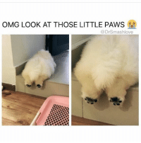 Memes, Omg, and Boop: OMG LOOK AT THOSE LITTLE PAWS  @DrSmashlove I want to boop them so badly. 😫 ( rp and follow @drsmashlove 💕 @drsmashlove)